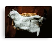 Silly Sophia... Just Hanging Out !! Canvas Print