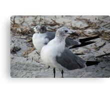 Birds On The Lookout Canvas Print