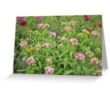 Garden Up North    Pentax Digital Camera 16mp X-5 Series Greeting Card