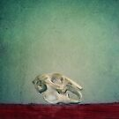 Fragility by Priska Wettstein