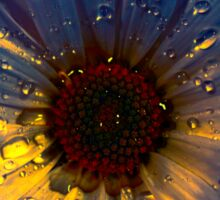 Rain drops on daisy flower petals Sticker