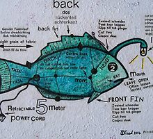The Electric Fish by Bonnie coad