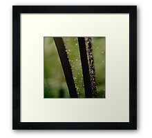 Rain caught in the fronds Framed Print