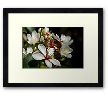 Autumn Blooms Framed Print