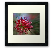 Fireworks in a flower Framed Print