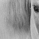 2.5.2016: Horse by Petri Volanen