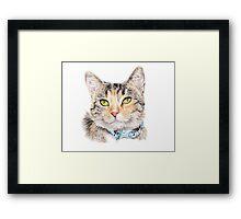 Ari - Rescue Kitten Framed Print
