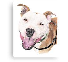 Jango - Staffordshire Bull Terrier Canvas Print