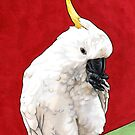 Sulphur Crested Cockatoo by ria gilham