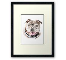 Freddie- Staffordshire Bull Terrier Framed Print