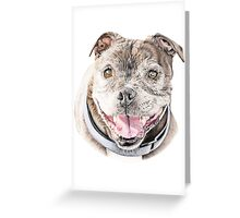 Freddie- Staffordshire Bull Terrier Greeting Card