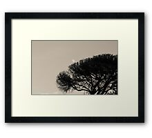 Empress of the Sky Framed Print