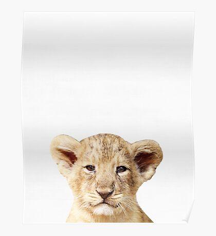Baby Lion, Nursery, Animal, Kids room, Modern art, Wall decor Poster