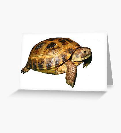 Greek Tortoise Greeting Card