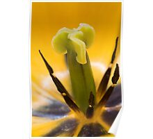 Close up of a yellow tulip flower Poster
