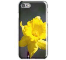 Spring Flower Series 19 iPhone Case/Skin