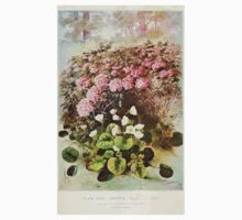 Southern wild flowers and trees together with shrubs vines Alice Lounsberry 1901 129 Shortia Kids Tee