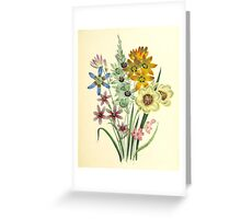 The ladies' flower garden of ornamental bulbous plants'. Greeting Card