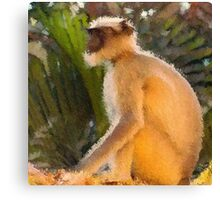 Meditation Monkey; The Sunshine Boy Canvas Print