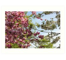 Pink and White Blossoms Art Print