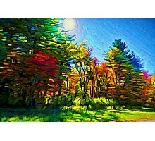 Sunny Autumn day in the wood Photographic Print