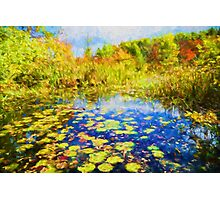 Autumn Lily pads  Photographic Print