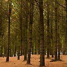 Pines by Werner Padarin