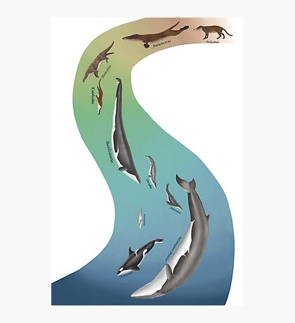 Whale evolution - prehistoric and modern whales Photographic Print