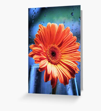 Baby The Rain Must Fall Greeting Card