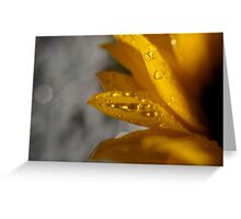 Dew drops on sunflower macro Greeting Card