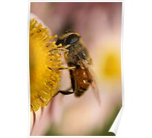 Bee on the flower - super macro Poster