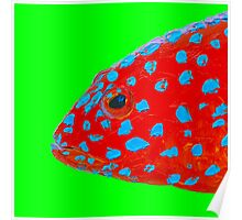 Strawberry Grouper Fish on green Poster