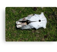 Cow Skull With Bullet Hole Canvas Print