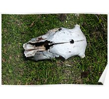 Cow Skull With Bullet Hole Poster
