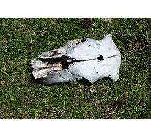 Cow Skull With Bullet Hole Photographic Print