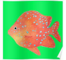 Tropical Fish painting on lime background Poster
