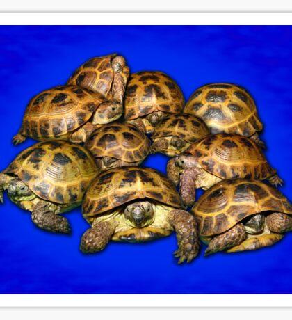 Greek Tortoise Group - Dark Blue Sticker