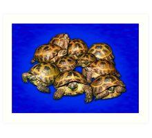 Greek Tortoise Group - Dark Blue Art Print