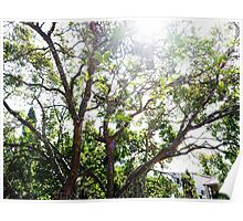 Fairy lights - spring trees Poster