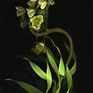Fritillaria ~ With A Curve by Barbara Wyeth