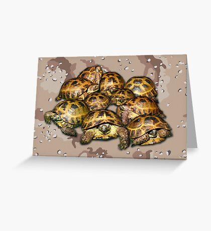 Greek Tortoise Group - Desert Camo Background Greeting Card