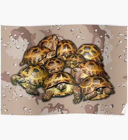 Greek Tortoise Group - Desert Camo Background Poster