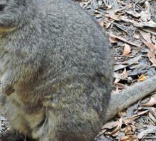 Tasmanian Pademelon - Thylogale Billardierii Sticker