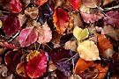 Autumn Colours by yolanda