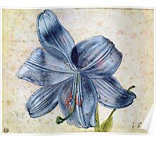 Vintage famous art - Albrecht Durer - Study Of A Lily Poster