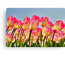 Pink Tulips Bow For The Sun Canvas Print