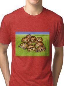 Greek Tortoise Group on Grass Background Tri-blend T-Shirt