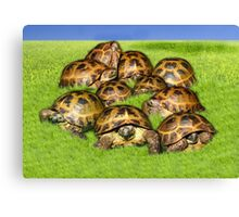 Greek Tortoise Group on Grass Background Canvas Print