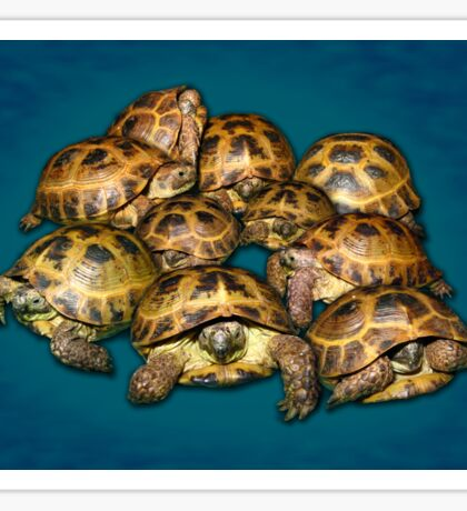 Greek Tortoise Group on Gray-Blue Background Sticker