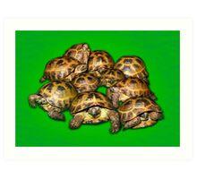 Greek Tortoise Group on Bright Green Background Art Print